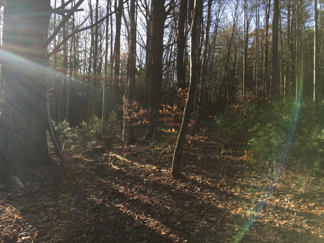 Woods outside of Woodstock, NY
