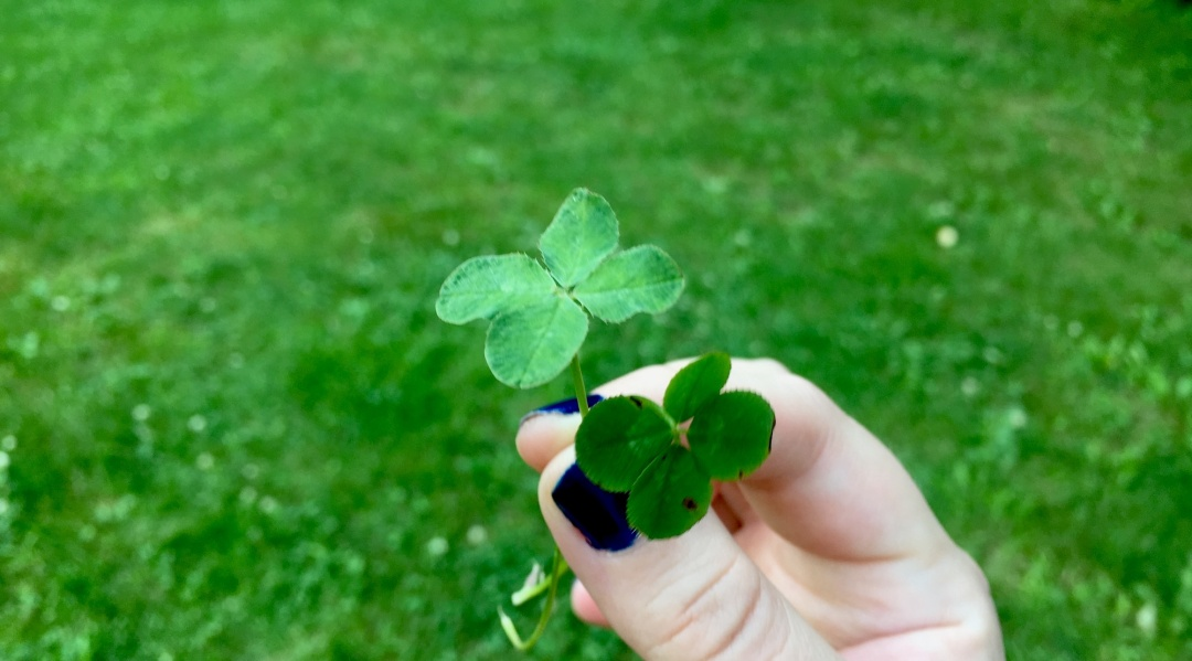 Two four leaf clovers
